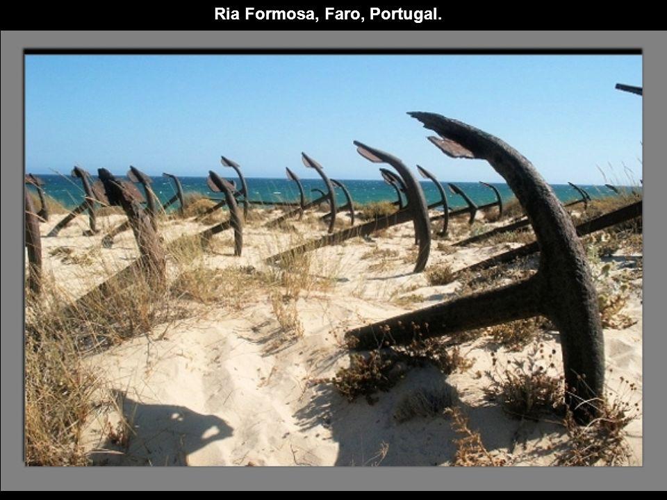 Ria Formosa, Faro, Portugal.
