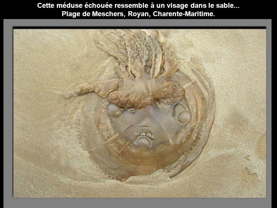 Sur la plage, à Saint-Marc, où le film de Jacques Tati Les vacances de Mr Hulot a été tourné