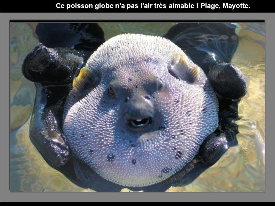 Cette méduse échouée ressemble à un visage dans le sable...