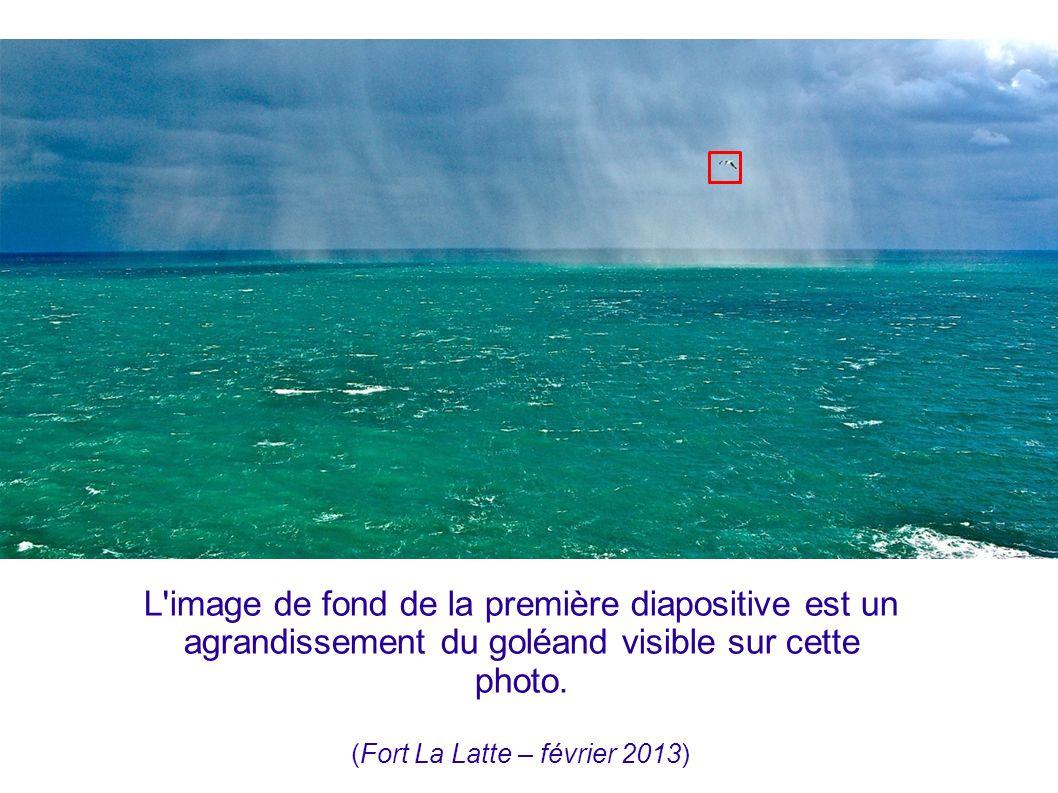 L'image de fond de la première diapositive est un agrandissement du goléand visible sur cette photo. (Fort La Latte – février 2013)