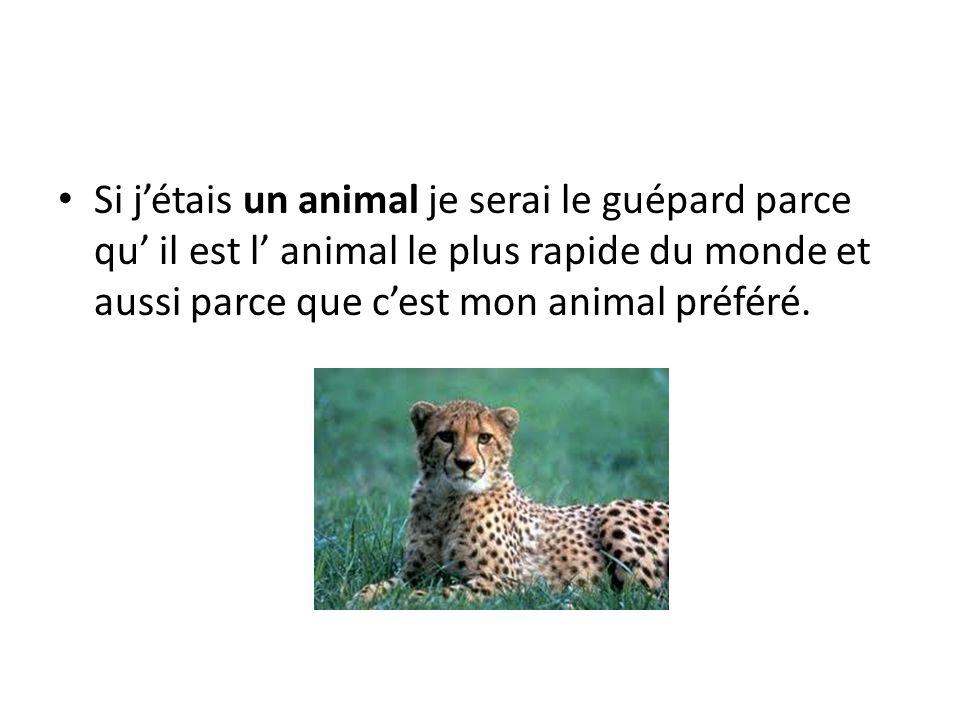 Si jétais un animal je serai le guépard parce qu il est l animal le plus rapide du monde et aussi parce que cest mon animal préféré.