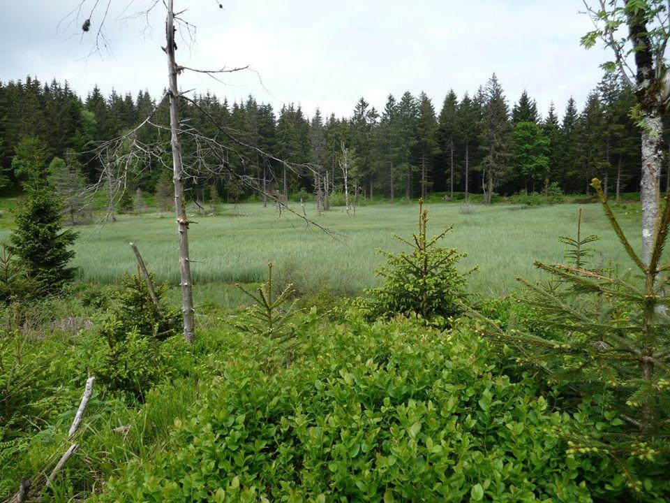 A quelques kilomètres de La Bresse, la commune Basse-sur-le-Rupt fut durement éprouvée durant la Seconde Guerre mondiale. Le lieu-dit
