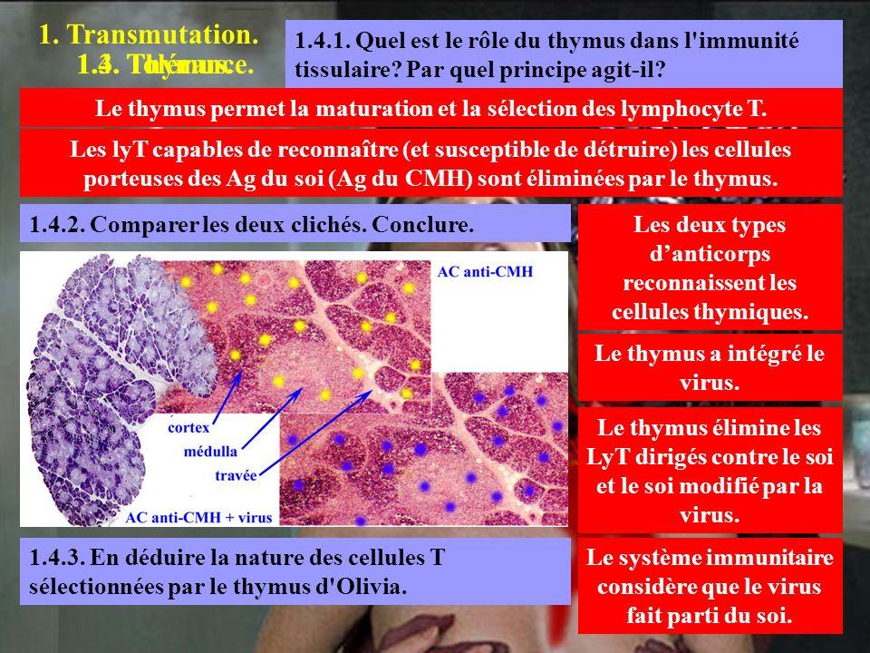1. Transmutation. 1.3. Tolérance. 1.4.1. Quel est le rôle du thymus dans l'immunité tissulaire? Par quel principe agit-il? Le thymus permet la maturat