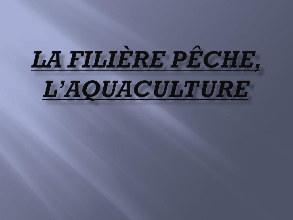 Introduction Animaux vertébrés qui vivent dans leau, les poissons jouent depuis toujours un rôle primordial dans lalimentation humaine, ce dautant quils ont pendant longtemps été abondants.