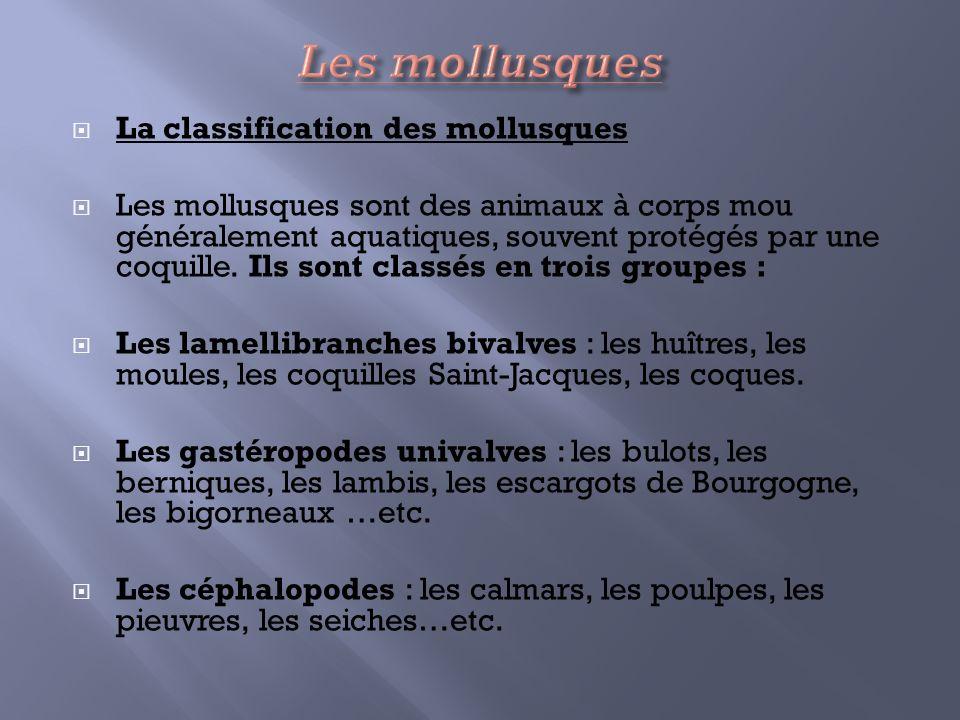 La classification des mollusques Les mollusques sont des animaux à corps mou généralement aquatiques, souvent protégés par une coquille. Ils sont clas
