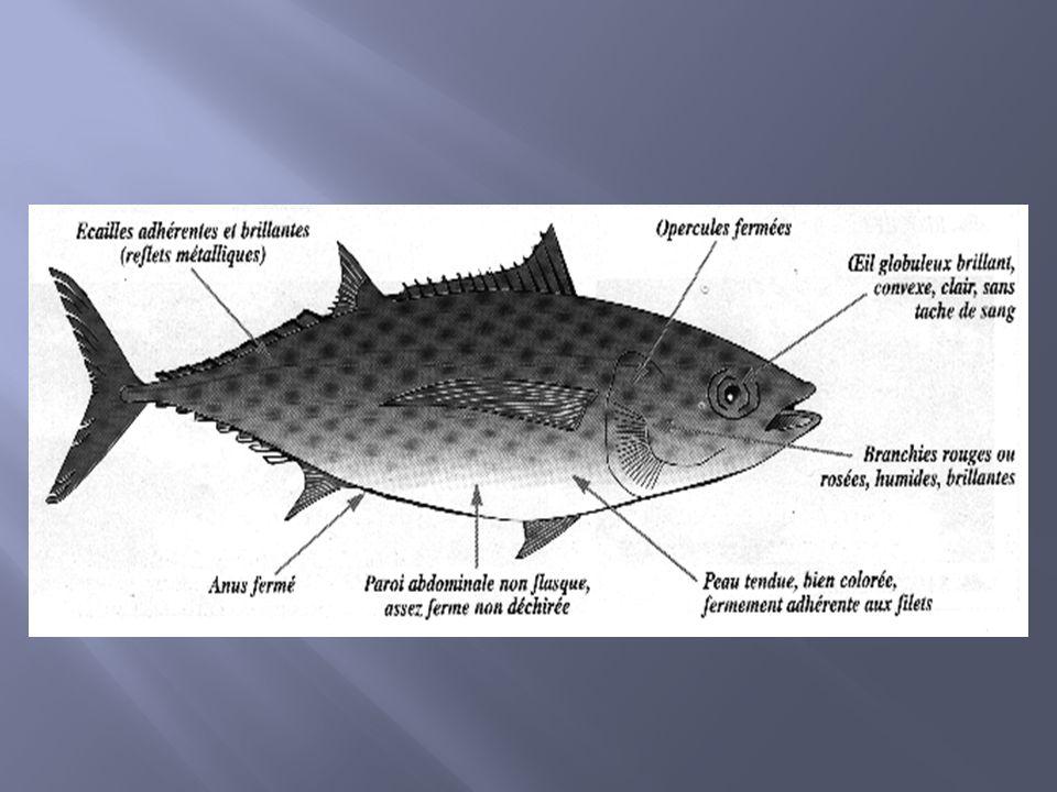 Généralités Les crustacés sont des arthropodes caractérisés par la présence d appendices articulés et disposées par paires.