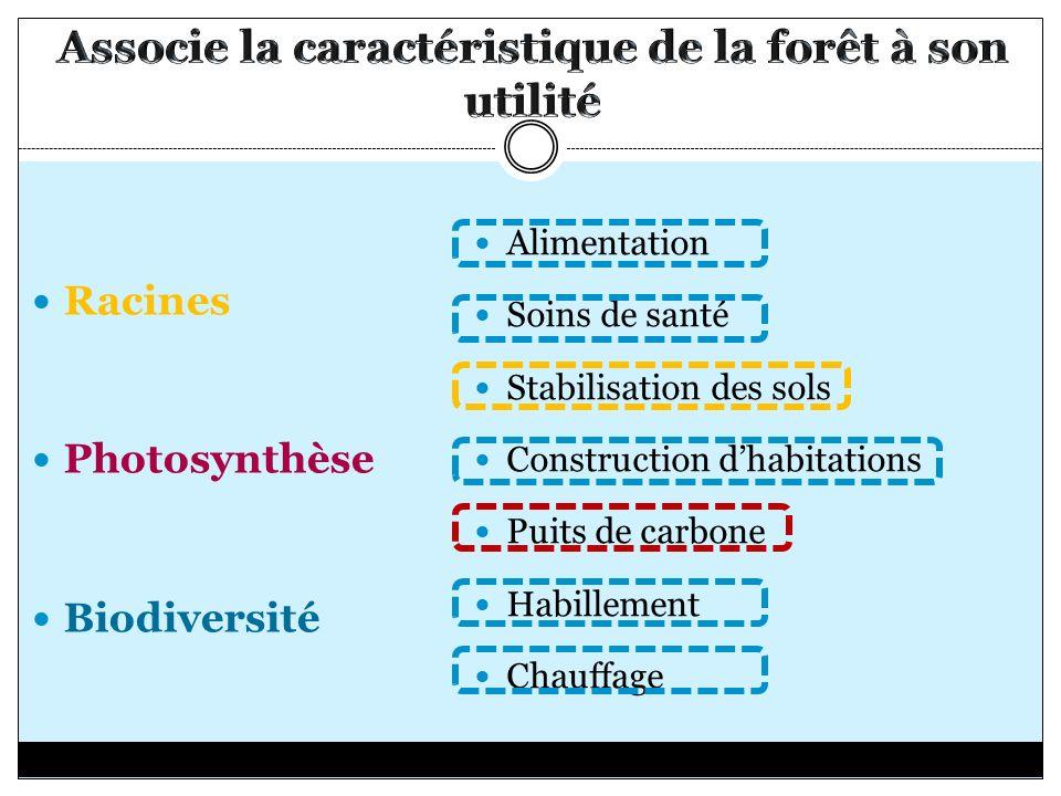 Racines Photosynthèse Biodiversité Alimentation Soins de santé Stabilisation des sols Construction dhabitations Puits de carbone Habillement Chauffage