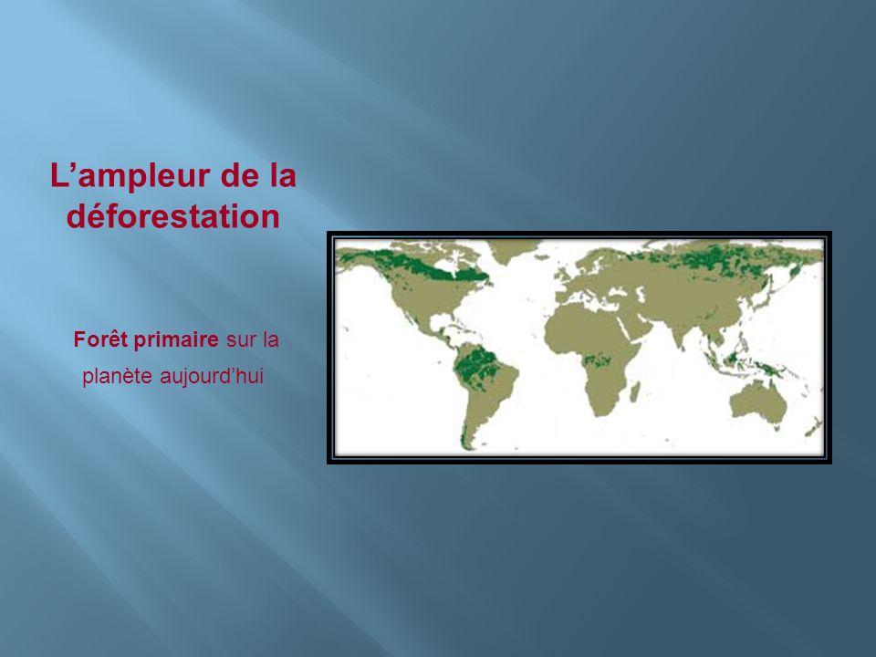 Lampleur de la déforestation Forêt primaire sur la planète aujourdhui