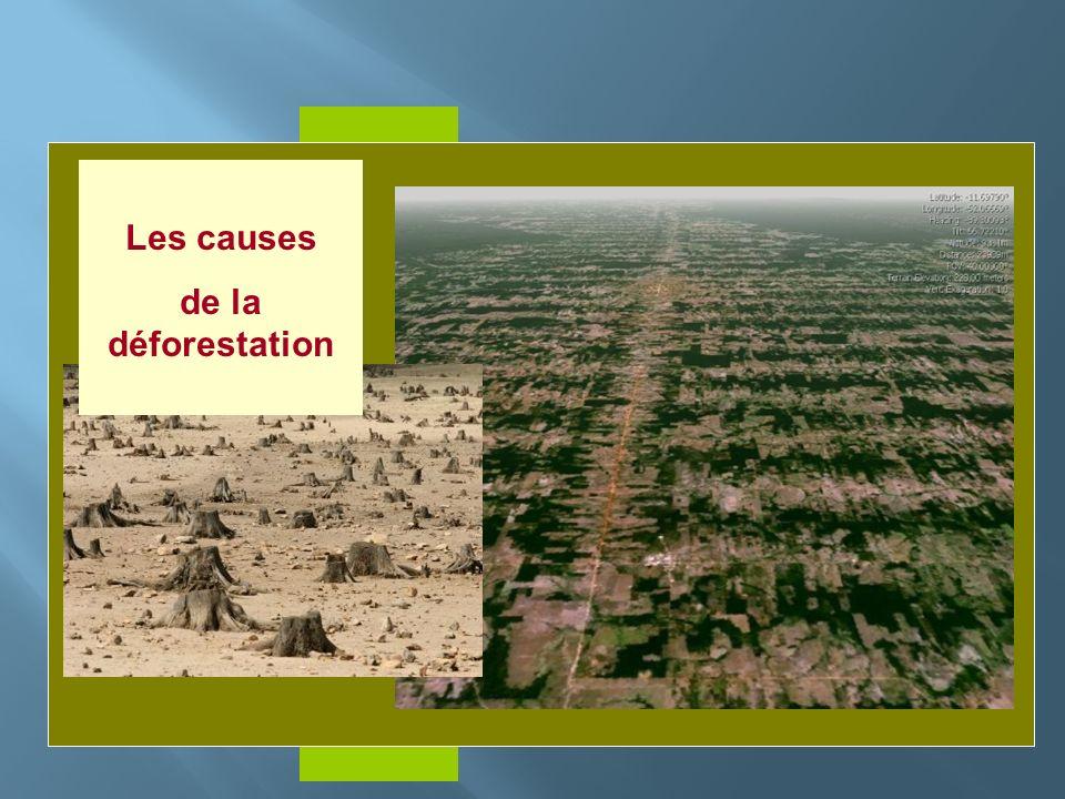 Insérer photo ici Les causes de la déforestation