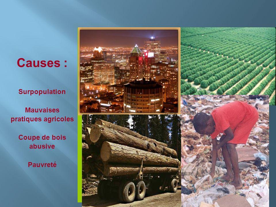 Causes : Surpopulation Mauvaises pratiques agricoles Coupe de bois abusive Pauvreté