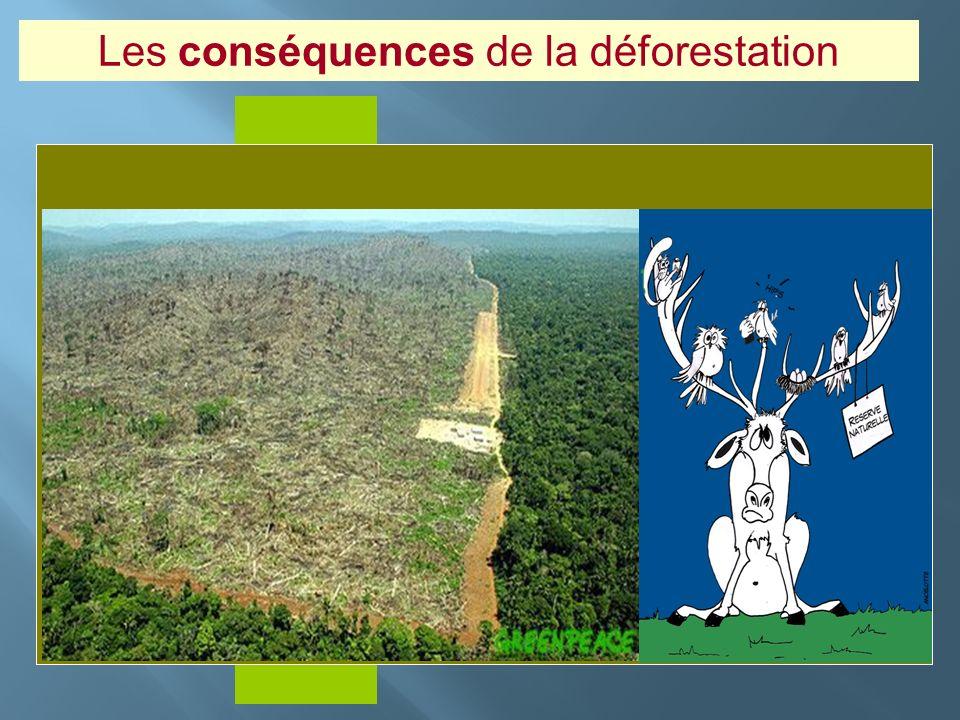Insérer photo ici Les conséquences de la déforestation