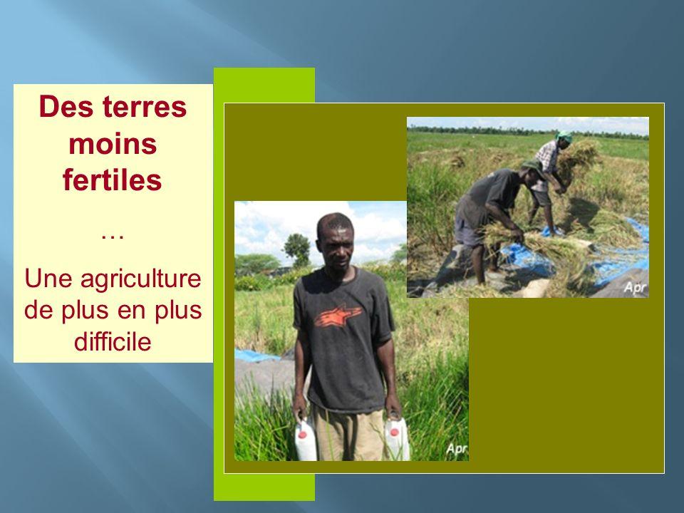 Insérer photo ici Des terres moins fertiles … Une agriculture de plus en plus difficile