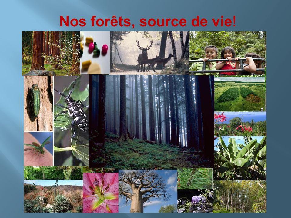 Nos forêts, source de vie!