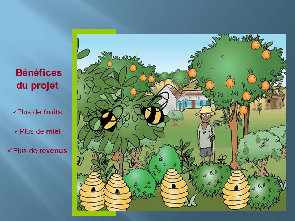 Bénéfices du projet Plus de fruits Plus de miel Plus de revenus
