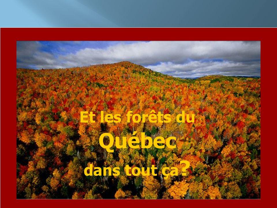 Et les forêts du Québec dans tout ça