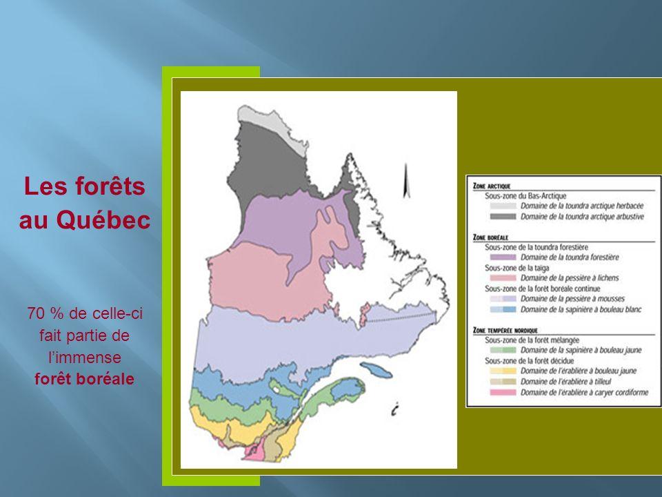 Les forêts au Québec 70 % de celle-ci fait partie de limmense forêt boréale