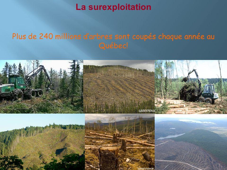 La surexploitation Plus de 240 millions darbres sont coupés chaque année au Québec!