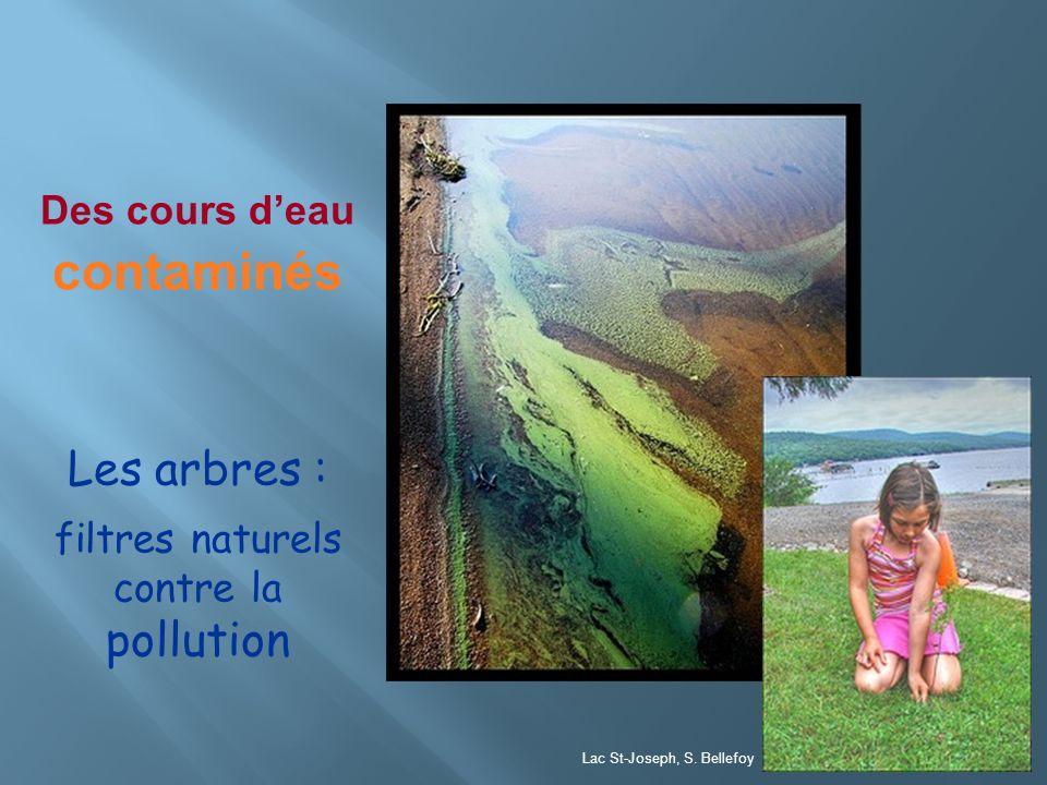 Des cours deau contaminés Les arbres : filtres naturels contre la pollution Lac St-Joseph, S. Bellefoy