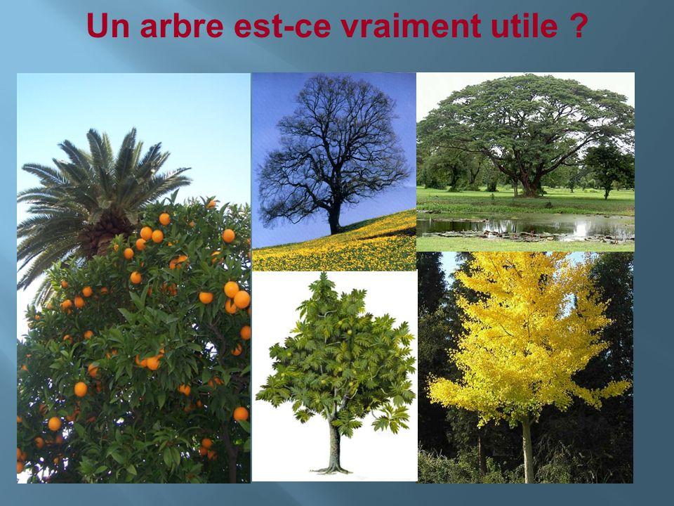 Un arbre est-ce vraiment utile ?