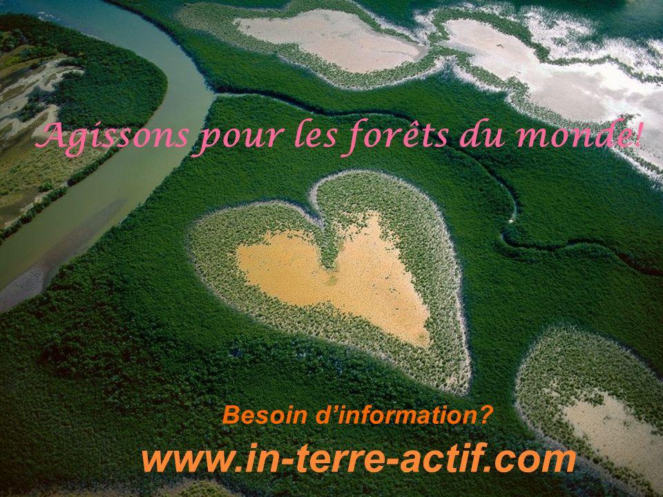 Besoin dinformation? www.in-terre-actif.com Agissons pour les forêts du monde!