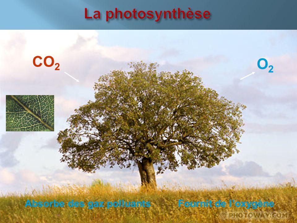 CO 2 Absorbe des gaz polluants Fournit de loxygène O2O2