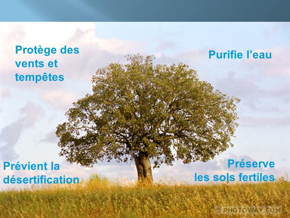 Protège des vents et tempêtes Purifie leau Prévient la désertification Préserve les sols fertiles