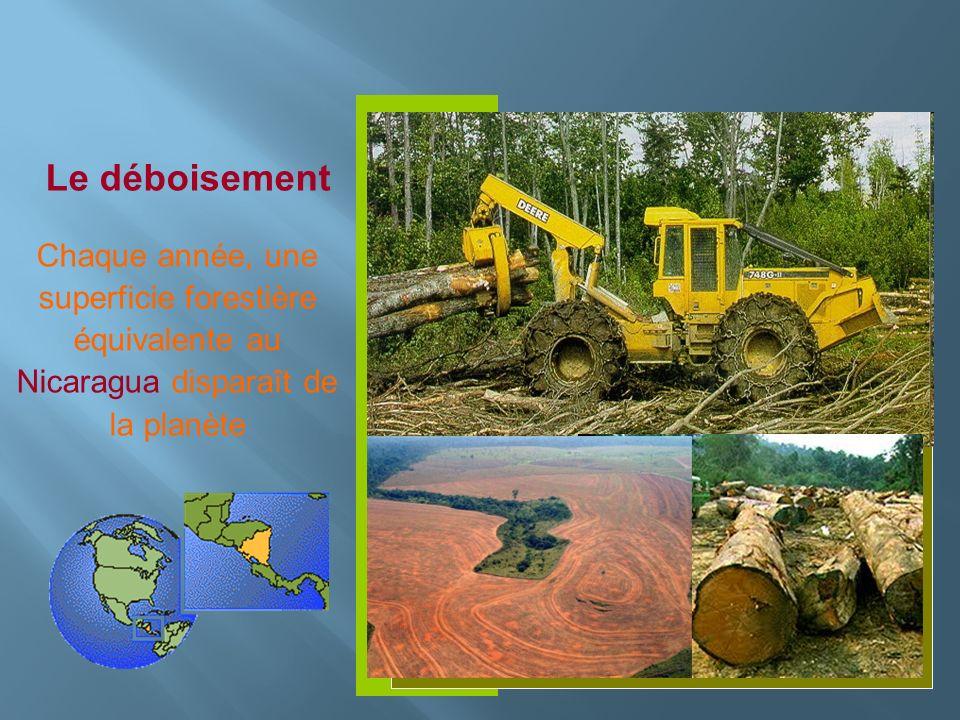 Le déboisement Chaque année, une superficie forestière équivalente au Nicaragua disparaît de la planète