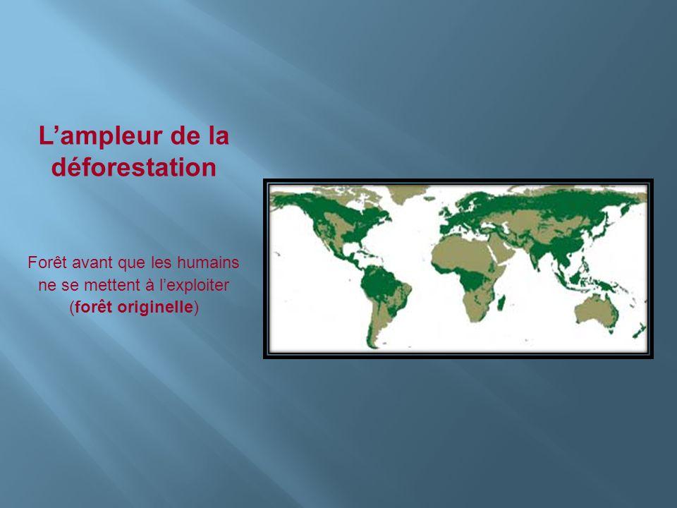 Lampleur de la déforestation Forêt avant que les humains ne se mettent à lexploiter (forêt originelle)