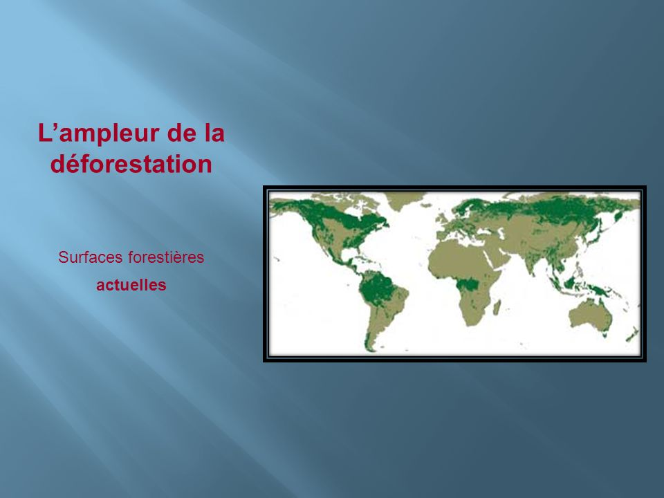 Lampleur de la déforestation Surfaces forestières actuelles