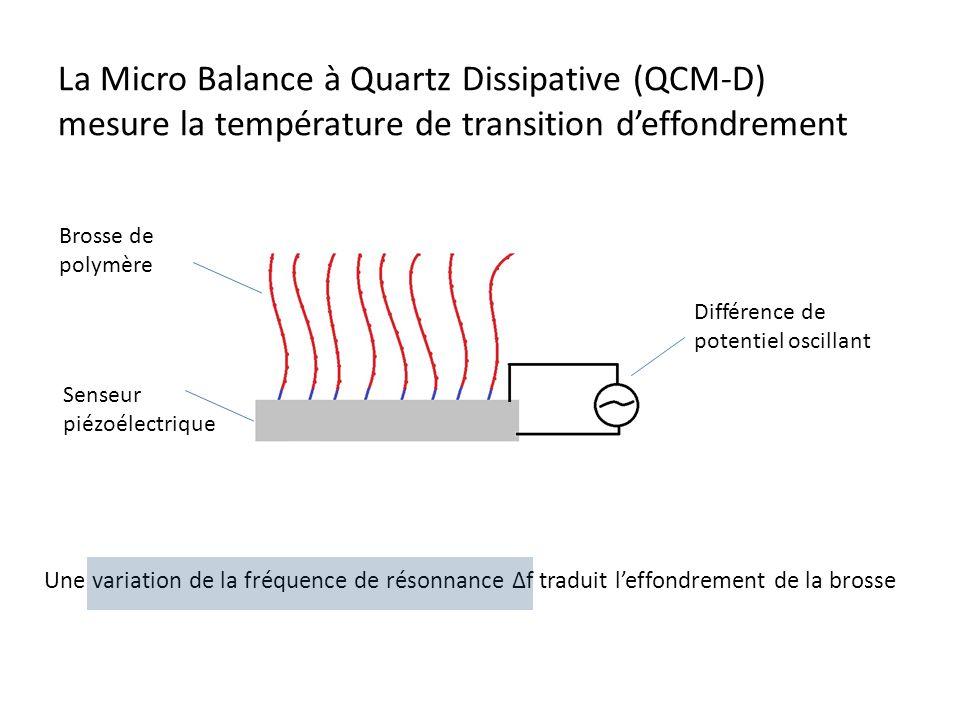 La Micro Balance à Quartz Dissipative (QCM-D) mesure la température de transition deffondrement Brosse de polymère Senseur piézoélectrique Différence de potentiel oscillant Une variation de la fréquence de résonnance Δf traduit leffondrement de la brosse