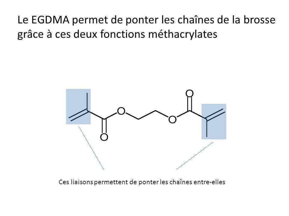 Le EGDMA permet de ponter les chaînes de la brosse grâce à ces deux fonctions méthacrylates Ces liaisons permettent de ponter les chaînes entre-elles