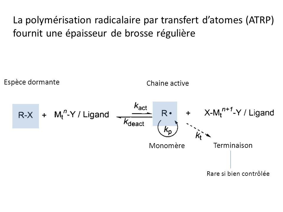 La polymérisation radicalaire par transfert datomes (ATRP) fournit une épaisseur de brosse régulière Espèce dormante Chaine active Rare si bien contrôlée Terminaison Monomère