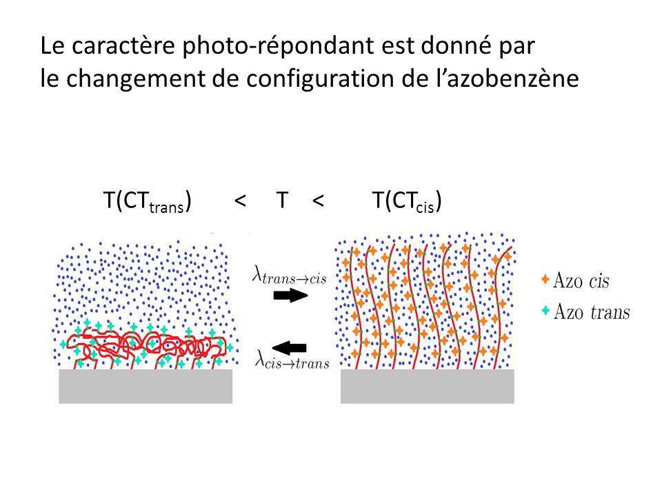La température de transition dune brosse photo-répondante est modulée par irradiation La polymérisation de la brosse et le greffage des azobenzènes sur les brosses de polymère fonctionnent Lirradiation induit une variation de lhydratation de la brosse MAIS la variation reste par contre assez faible
