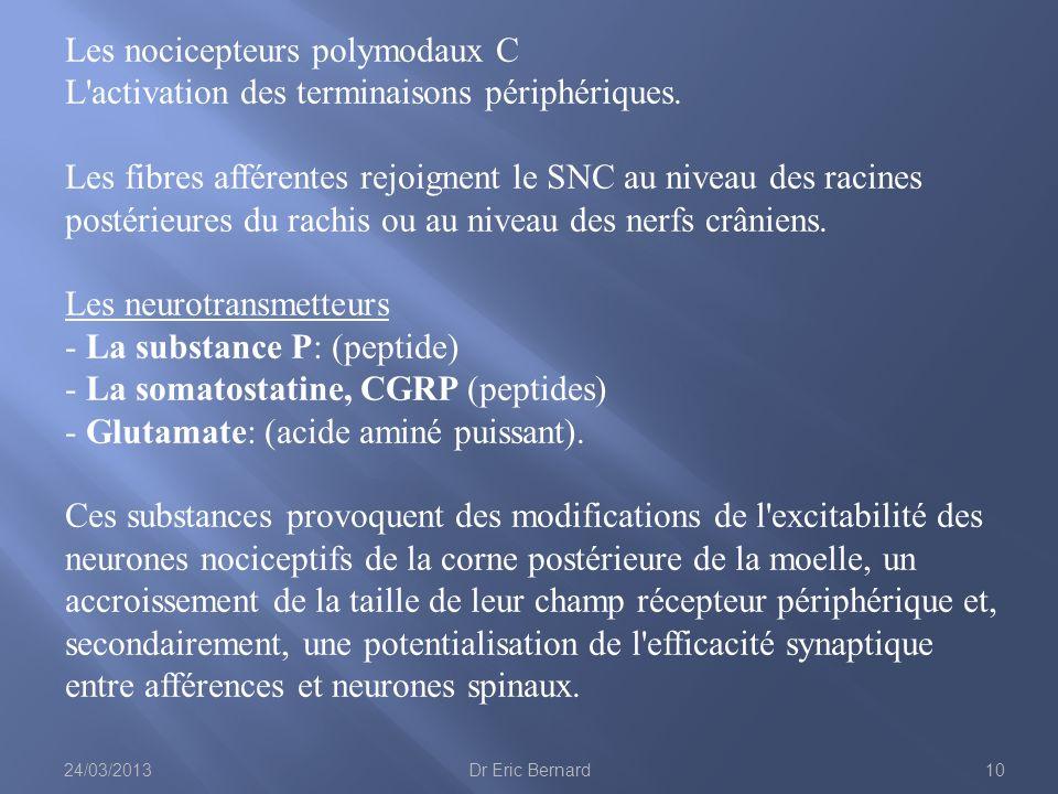 Les nocicepteurs polymodaux C L'activation des terminaisons périphériques. Les fibres afférentes rejoignent le SNC au niveau des racines postérieures