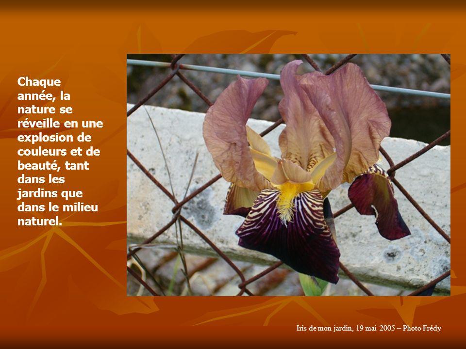 Chaque année, la nature se réveille en une explosion de couleurs et de beauté, tant dans les jardins que dans le milieu naturel.