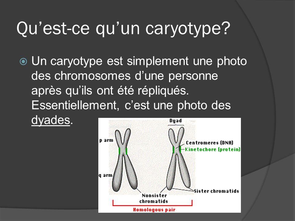 Quest-ce quun caryotype? Un caryotype est simplement une photo des chromosomes dune personne après quils ont été répliqués. Essentiellement, cest une