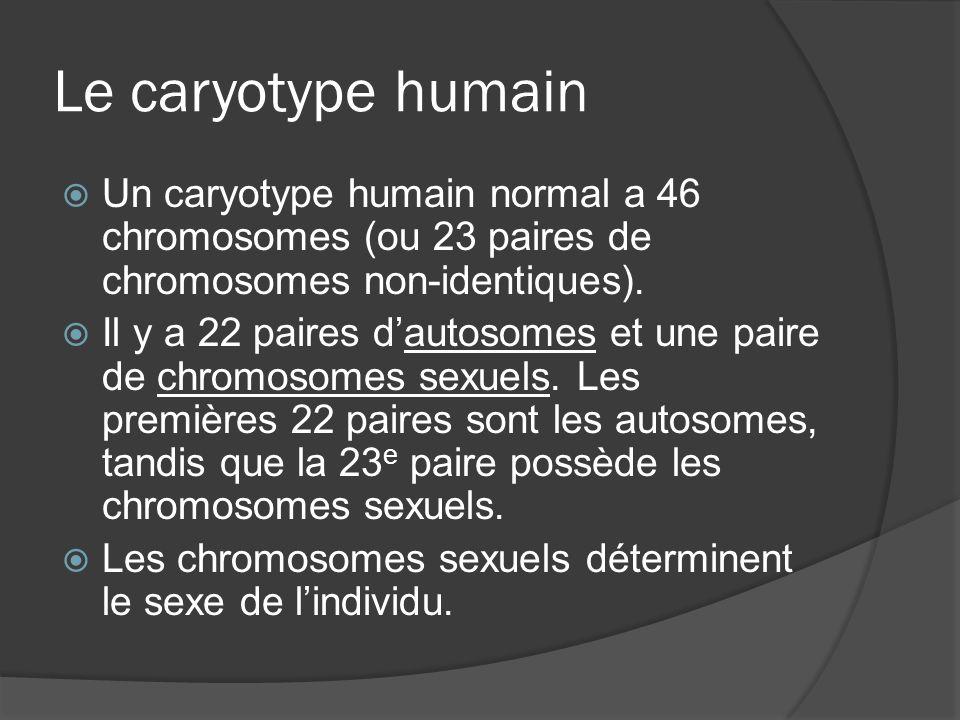Le caryotype humain Un caryotype humain normal a 46 chromosomes (ou 23 paires de chromosomes non-identiques). Il y a 22 paires dautosomes et une paire