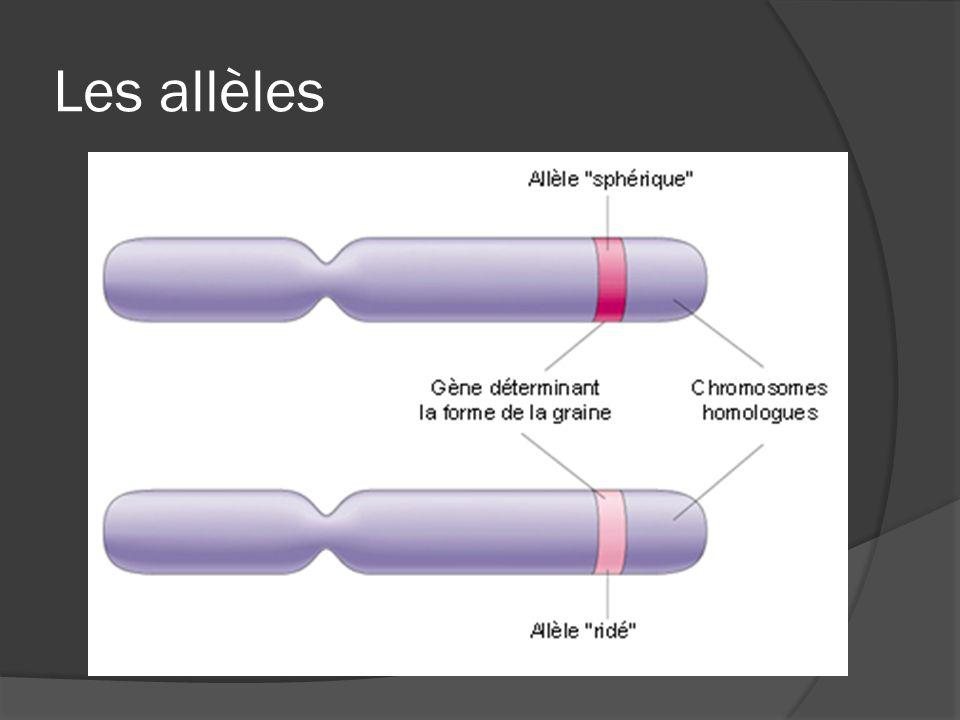 Les allèles
