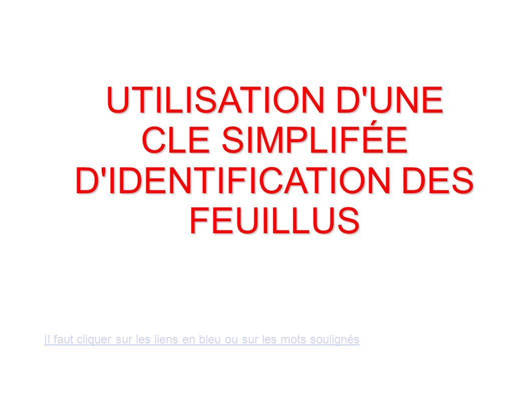 UTILISATION D UNE CLE SIMPLIFÉE D IDENTIFICATION DES FEUILLUS Il faut cliquer sur les liens en bleu ou sur les mots soulignés