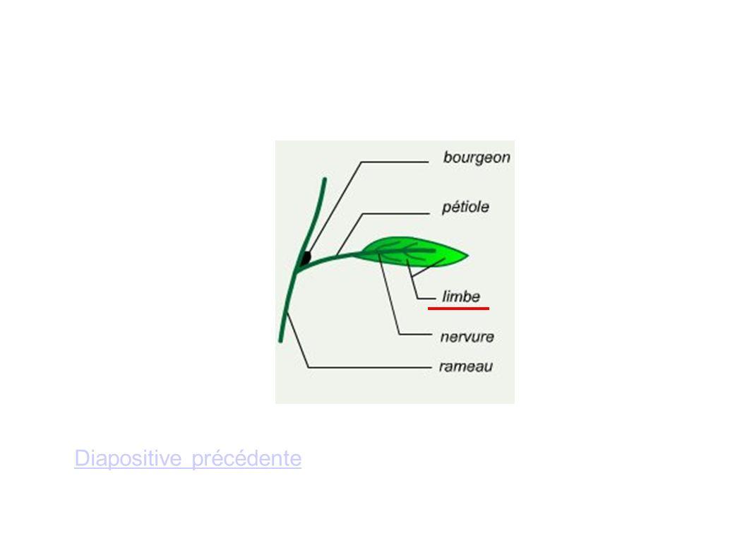 Diapositive précédente