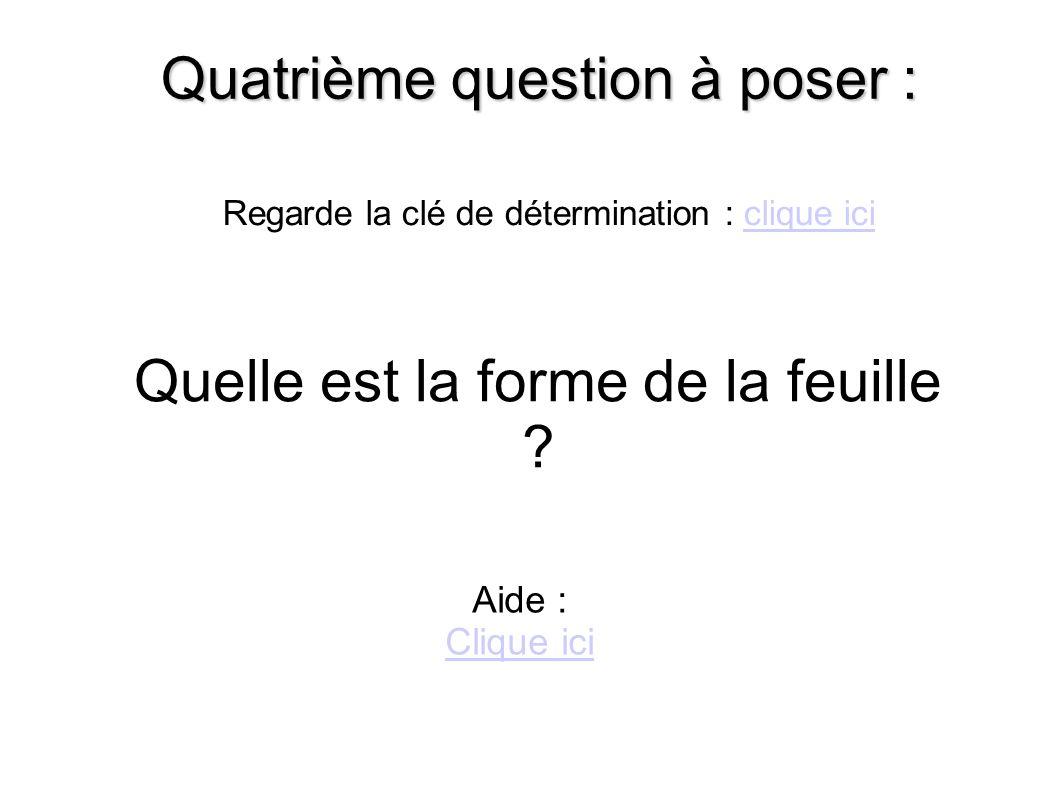Quatrième question à poser : Quelle est la forme de la feuille .