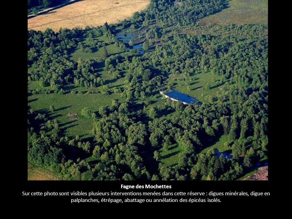 Fagne des Mochettes Sur cette photo sont visibles plusieurs interventions menées dans cette réserve : digues minérales, digue en palplanches, étrépage