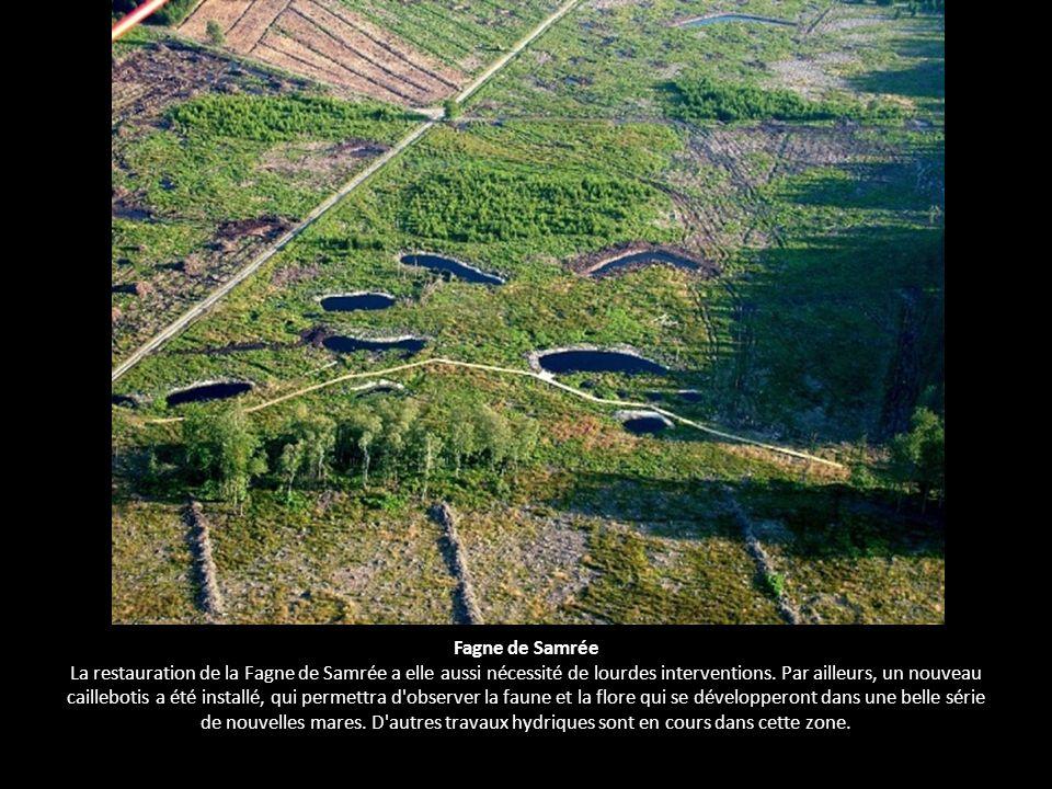 Fagne de Samrée La restauration de la Fagne de Samrée a elle aussi nécessité de lourdes interventions. Par ailleurs, un nouveau caillebotis a été inst