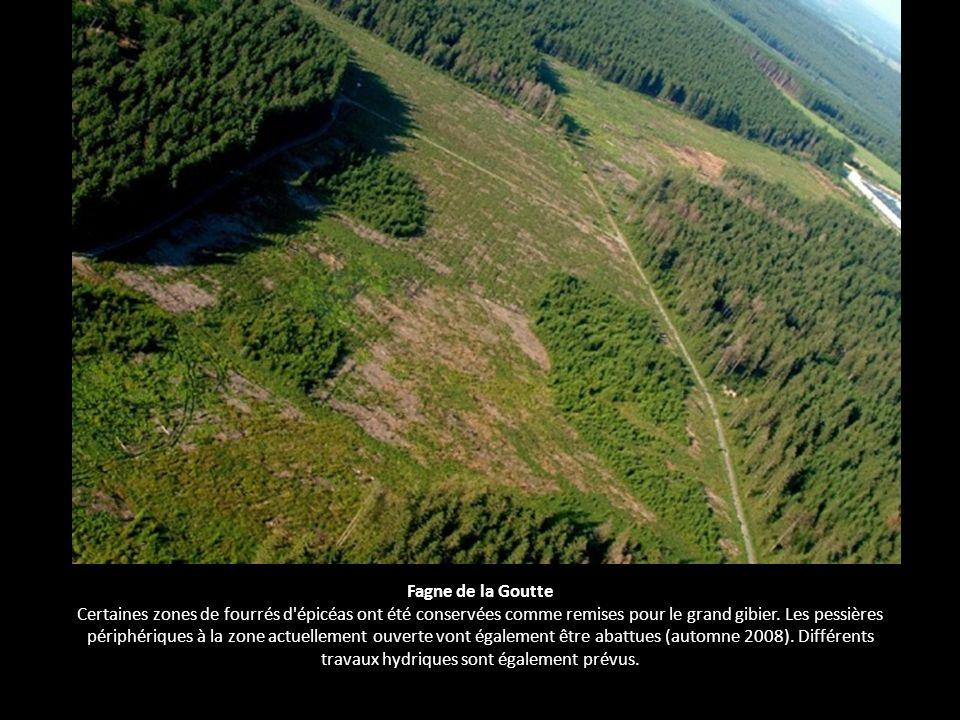 Fagne de la Goutte Certaines zones de fourrés d'épicéas ont été conservées comme remises pour le grand gibier. Les pessières périphériques à la zone a