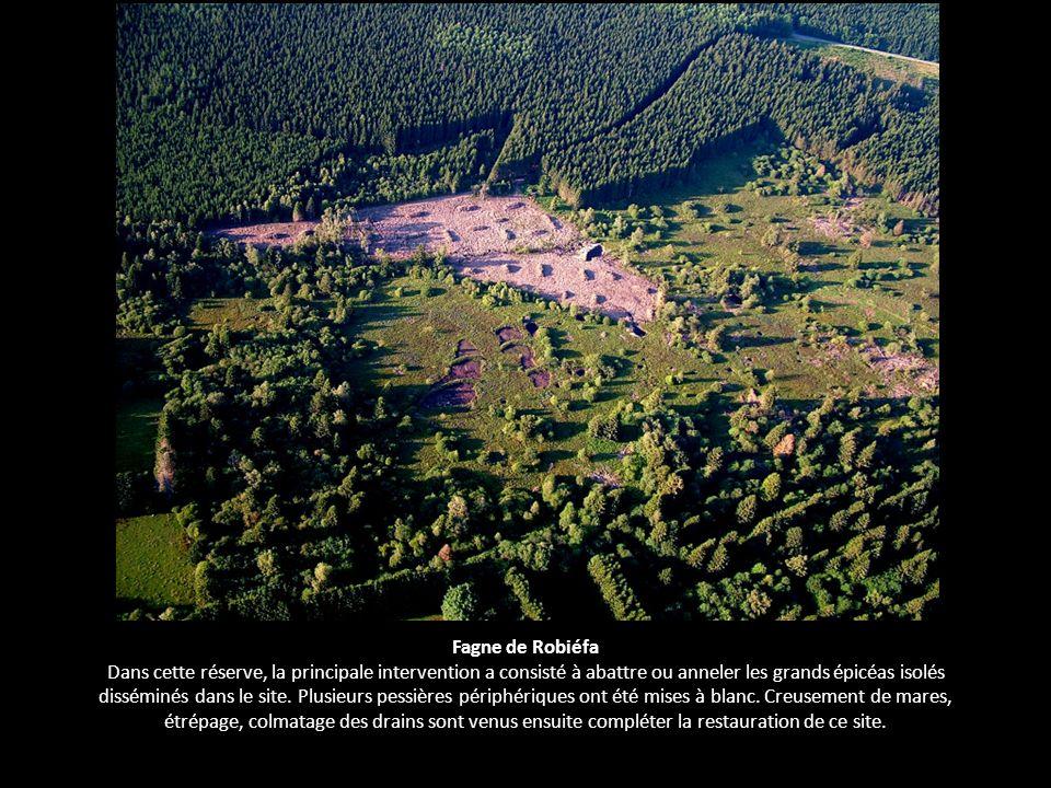 Fagne de Robiéfa Dans cette réserve, la principale intervention a consisté à abattre ou anneler les grands épicéas isolés disséminés dans le site. Plu