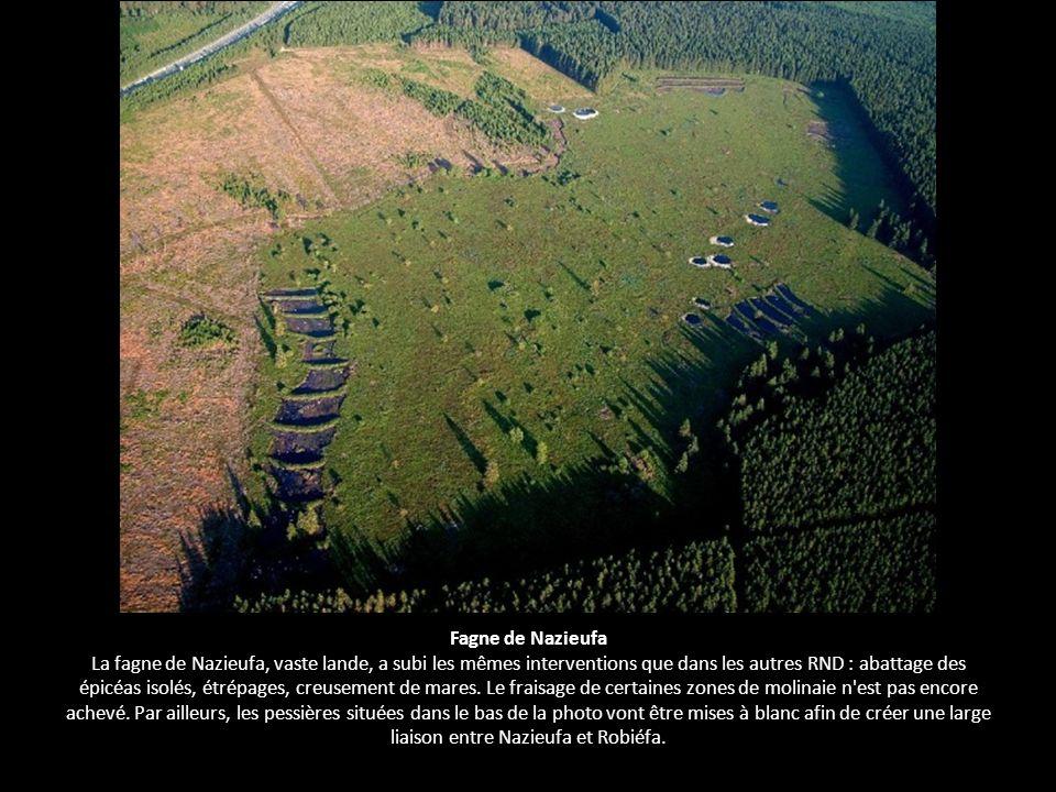 Fagne de Nazieufa La fagne de Nazieufa, vaste lande, a subi les mêmes interventions que dans les autres RND : abattage des épicéas isolés, étrépages,