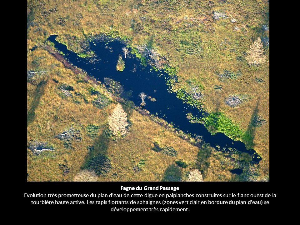 Fagne du Grand Passage Evolution très prometteuse du plan d'eau de cette digue en palplanches construites sur le flanc ouest de la tourbière haute act