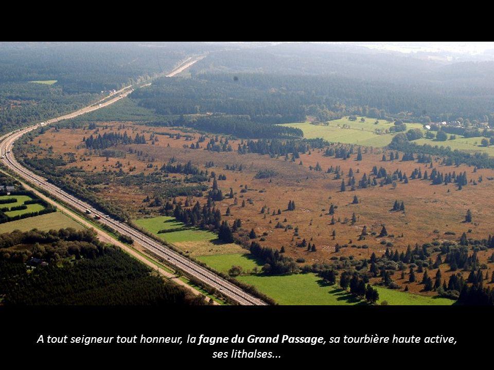 A tout seigneur tout honneur, la fagne du Grand Passage, sa tourbière haute active, ses lithalses...