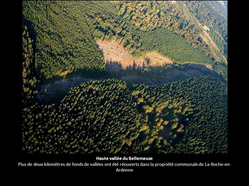 Haute vallée du Bellemeuse Plus de deux kilomètres de fonds de vallées ont été réouverts dans la propriété communale de La-Roche-en- Ardenne