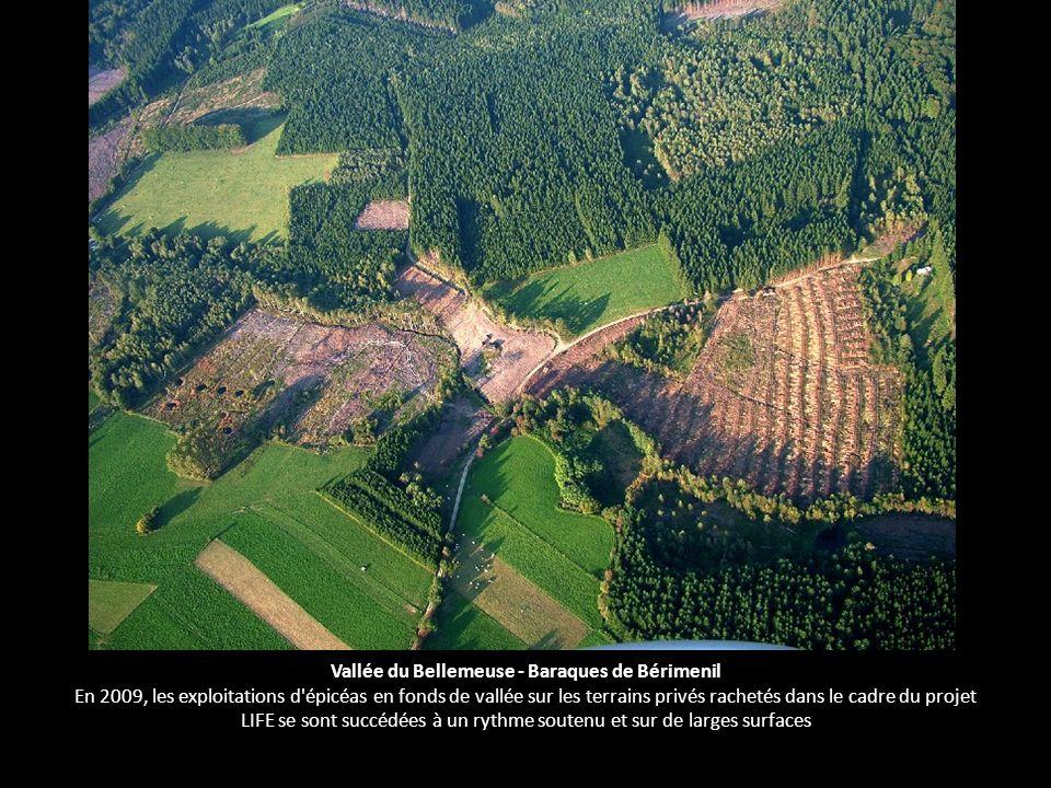 Vallée du Bellemeuse - Baraques de Bérimenil En 2009, les exploitations d'épicéas en fonds de vallée sur les terrains privés rachetés dans le cadre du